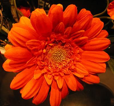 flowers062506e.JPG