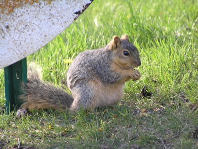 arboretumsquirrel