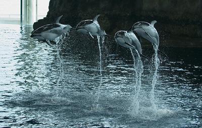 shedddolphins