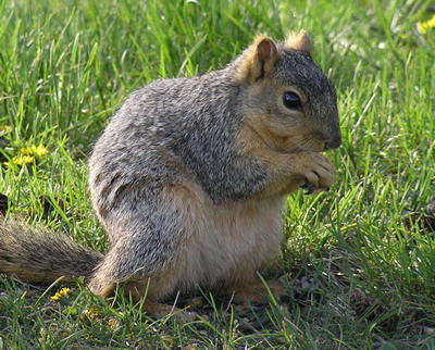 squirrel cropped